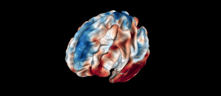 Badacze z SISSA odkryli, jak objętośc pewnego rejonu mózgu wpływa na nasze osądy moralne /Indrajeet Patil /materiały prasowe