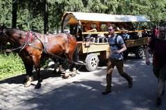 Badania koni wożących turystów do Morskiego Oka