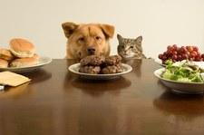 Badania naukowe dowiodły, że psy są mądrzejsze od kotów