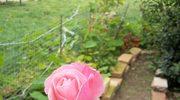 Bajdurzenie w kwiatach z muzyka cyganska w tle