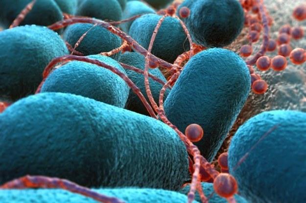 Bakterie jelitowe pomagają w walce z rakiem /123RF/PICSEL