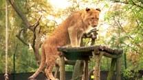 Bardzo wiele osób marzy o tym, żeby mieć w domu egzotyczne zwierzę