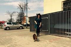 Bez bezpańskich psów. W Łódzkiem rozwiązano problem bezdomnych czworonogów