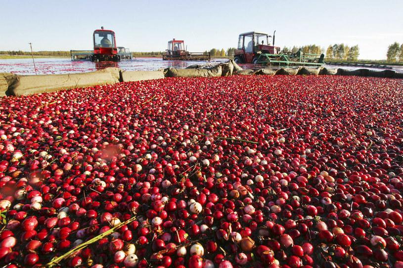 Białoruś twierdzi, że może zastąpić Polskę w dostawach owoców /AFP