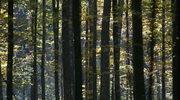Białowieża i prastary las