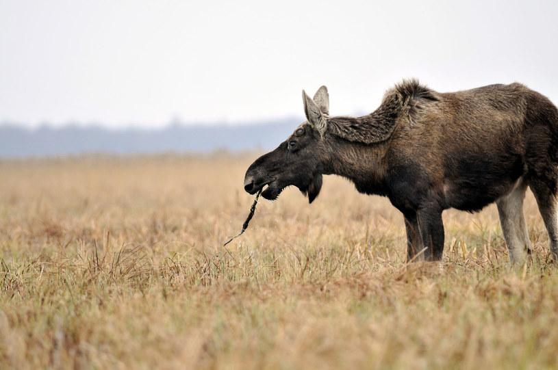 Biebrzański Park Narodowy /©123RF/PICSEL