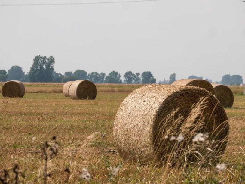 Biomasa jako źródło ciepła? /MIKOLAJ ZACHAROW/REPORTER /Agencja SE/East News