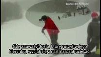 Bliskie spotkanie z łosiem na stoku narciarskim
