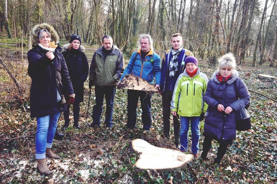 Blisko pół tysiąca drzew zostanie wyciętych w parku Grabiszyńskim we Wrocławiu /Partia Zielonych we Wrocławiu /Materiały prasowe