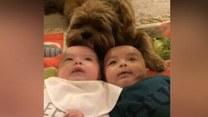 Bliźniaki pod opieką… psa-niańki