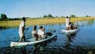 Botswana, rezerwat przyrody Moremi /Encyklopedia Internautica