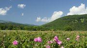 Bułgaria. W największym na świecie zagłębiu róż!
