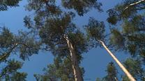 By spłonął wielki las, wystarczy mała iskra. Strażacy i leśnicy ostrzegają przed pożarami