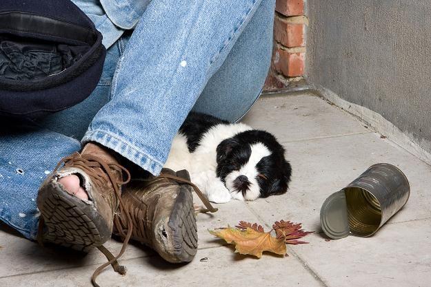 Być bezdomnym to nie dramat - niektórzy uznali nawet, że to najlepszy sposób na życie /© Panthermedia