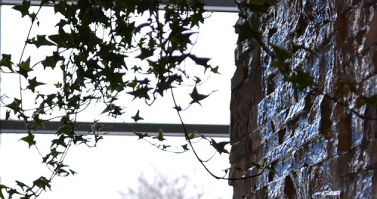 Całoroczny ogród czeka na chorych z Torunia