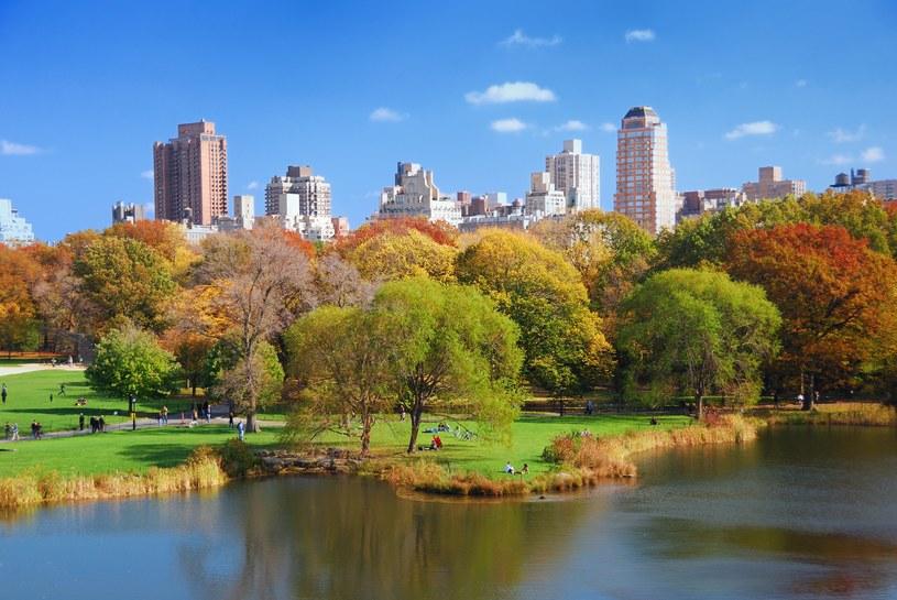 Central Park w Nowym Jorku /123/RF PICSEL