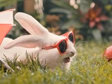 Chcesz mieć dzieci? Weź przykład z królików! Zaskakujący spot MZ
