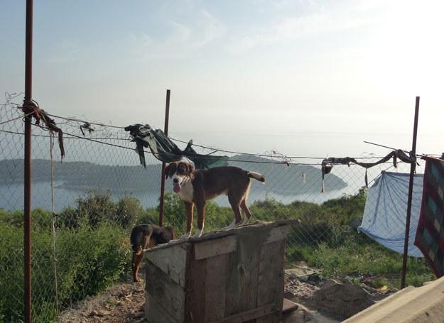 Chorwacki azyl      Fot. z archiwum Izabeli Sowy /INTERIA.PL