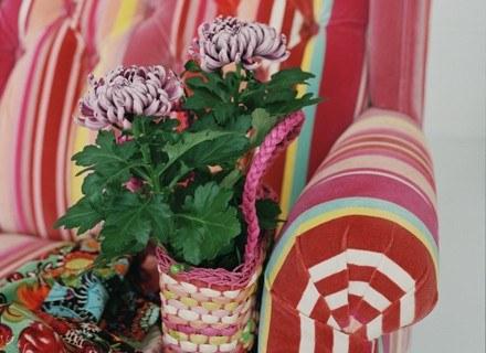 Chrysanthemum /materiały prasowe