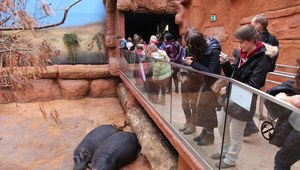 Ciekawe ogrody zoologiczne w Polsce
