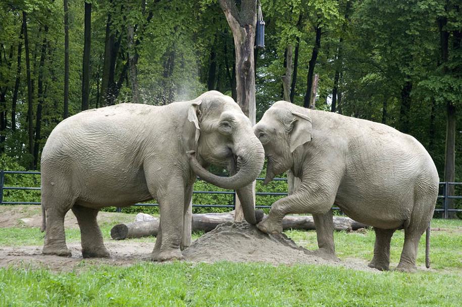 Citta /Dorota Maszczyk, zoo w Krakowie /Materiały prasowe