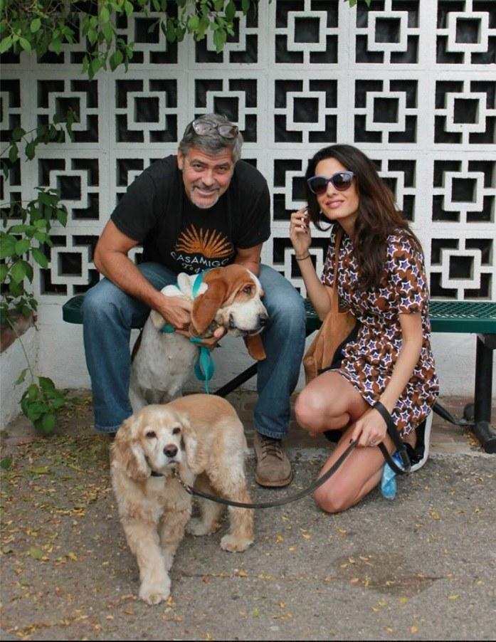Clooneyowie z adoptowanym psem /Facebook/SGVHS/Printscreen /INTERIA.PL