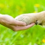 Co mają wspólnego psy i dzieci?