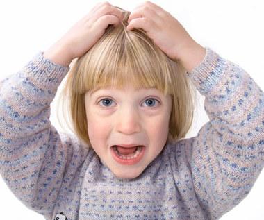 Co robić, gdy dziecko ma wszawicę?