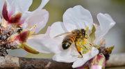 Co się stanie, gdy zabraknie pszczół?