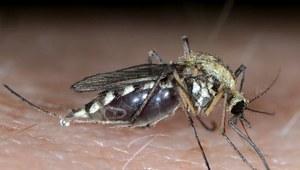 Co tak naprawdę się dzieje, kiedy gryzie komar