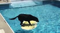 Co takiego było w basenie, że musiał tam wejść?