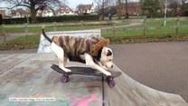 Co Ziggy Trixx zaprezentuje w skate parku?