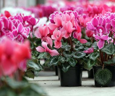 Co zrobić,  żeby kwiaty zimą zakwitły