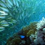 Coraz mniej tlenu w oceanach