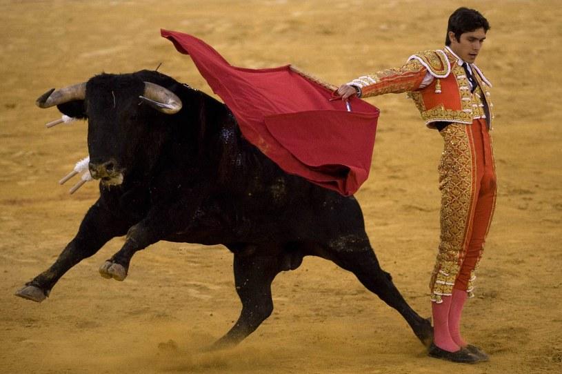 Corrida w Hiszpanii /AFP
