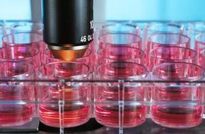 Cudowny lek przyspieszający regenerację narządów