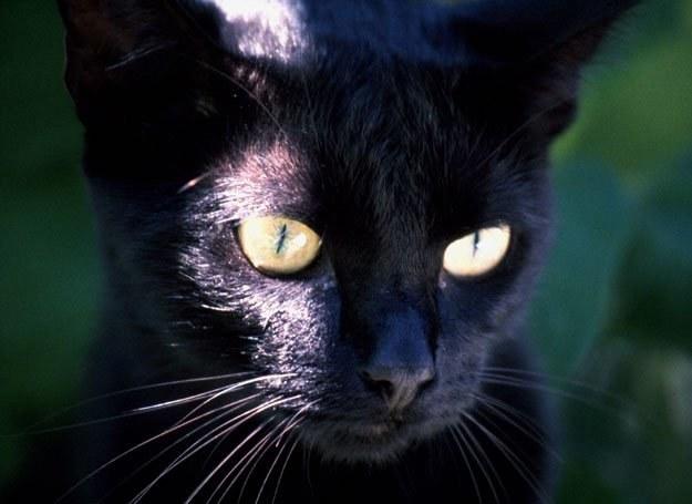 Czarny kot nie wróży niczego dobrego