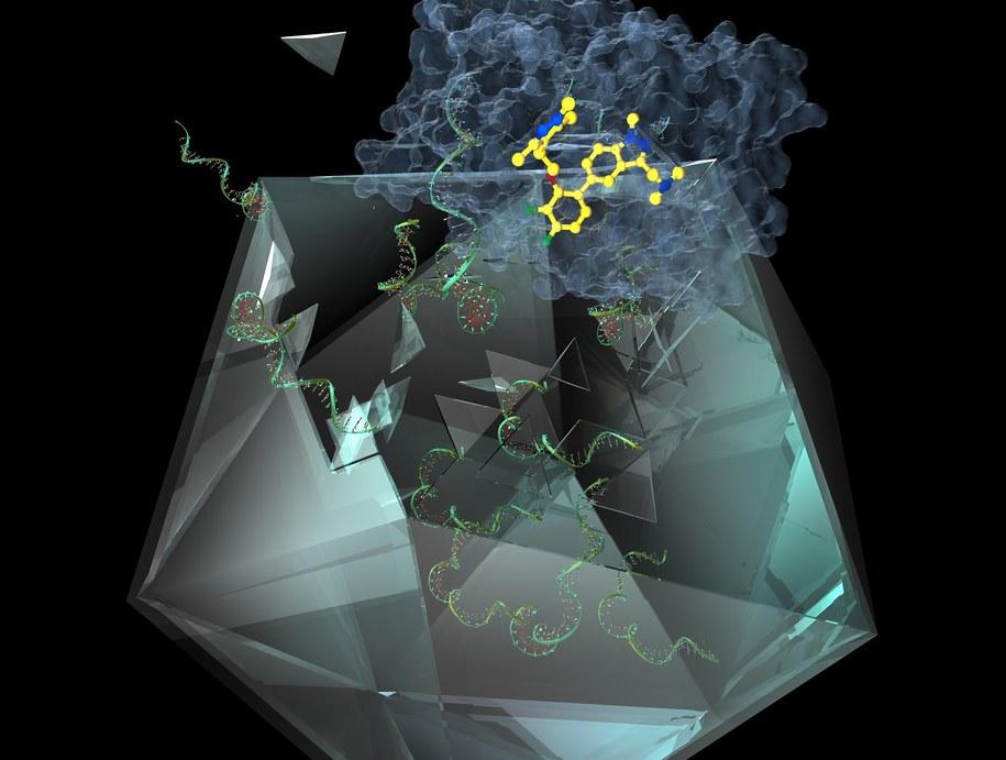 Cząstka IMP-1088 (żółta), białko NMT (niebieskie), RNA (zielone) /Imperial College London /Materiały prasowe