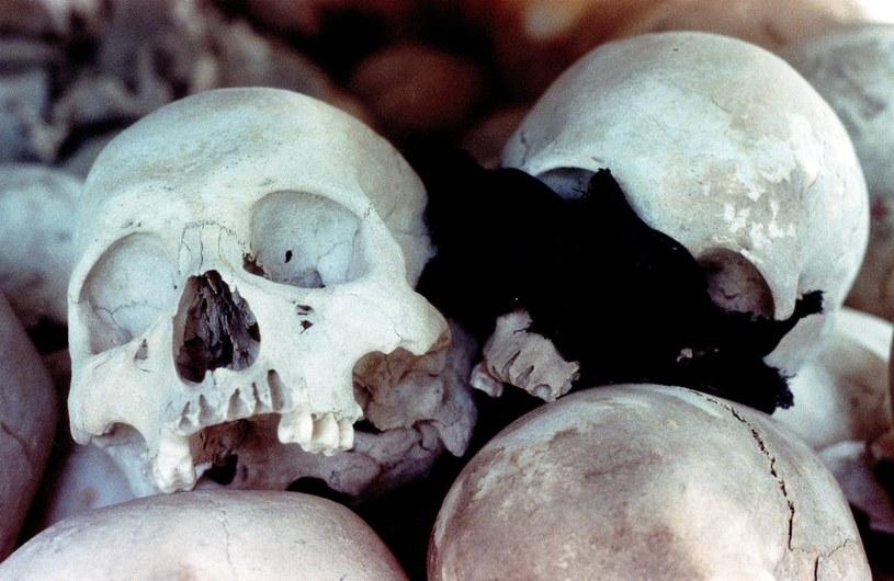 Czaszki ofiar na polach śmierci - miejsca kaźni ok. 17 tys. ludzi, gdzie masowo zabijano i grzebano ofiary reżimu podczas komunistycznych rządów Czerwonych Khmerów w latach 1975 - 1979 /Tomasz Wierzejski/Fotonova /East News