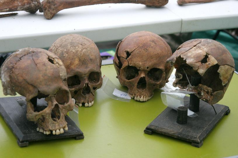 Czaszki wydobyte podczas ekshumacji na Łączce /Joanna Borowska /Agencja FORUM