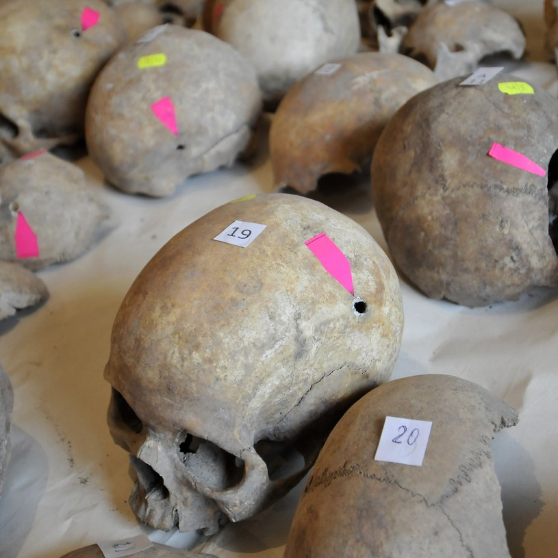 Czaszki zamordowanych przez żołnierzy NKWD /AFP /AFP