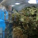 Czechy: Prawie sześć kilogramów marihuany w samochodzie Polaka
