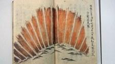Czerwona zorza nad Kioto dowodem na najpotężniejszą burzę słoneczną w dziejach