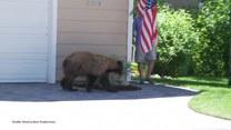 Człowiek kontra niedźwiedź. Kto ucieknie pierwszy?