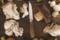 Czy grzyby mają wartości odżywcze?