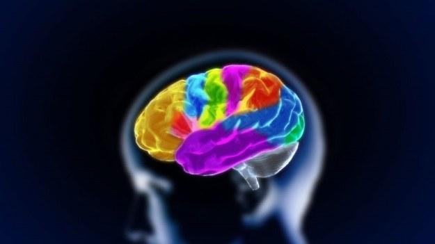 Czy kiedyś będzie możliwe sterowanie umysłem innego ciała? Pierwszy krok już zrobiono /123RF/PICSEL