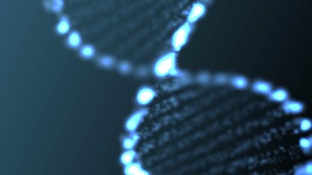 Czy klej z DNA faktycznie kiedyś pojawi się na rynku? /©123RF/PICSEL
