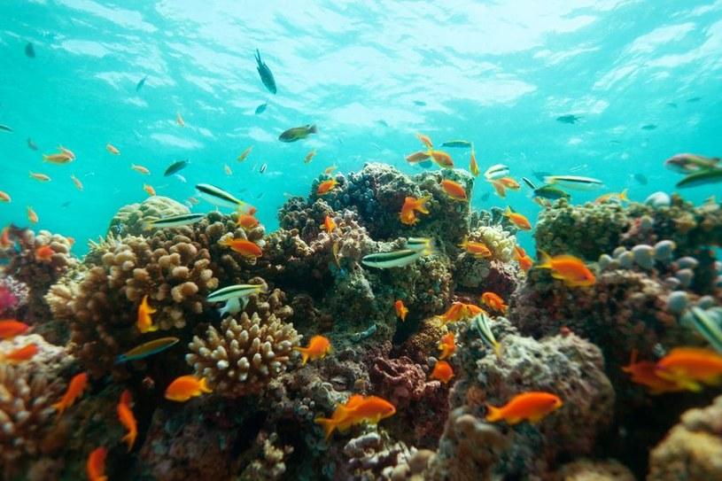 Czy lek chroniący przez zakażeniem wriusem HIV kryje się w rafach koralowych? /©123RF/PICSEL