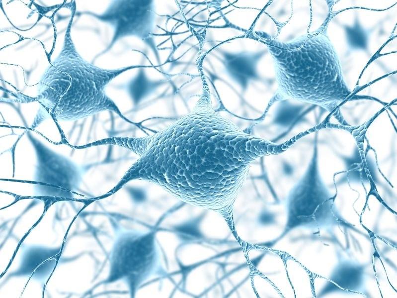 Czy naukowcy są o krok od przełomowego odkrycia w neurobiologii? /©123RF/PICSEL