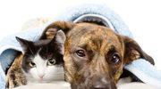 Czy psy mogą chorować na nadciśnienie tętnicze?